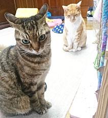 我が家の保護猫